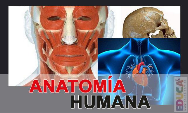 Anatomía Humana | Historia, Literatura, Educación de Bolivia, Mapas