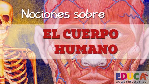 ciencias el cuerpo humano
