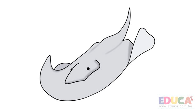Dibujo de mantarraya coloreada - educa.com.bo