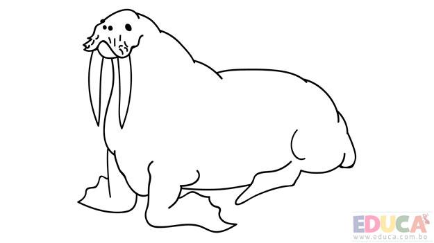Dibujo de morsa para colorear - educa.com.bo