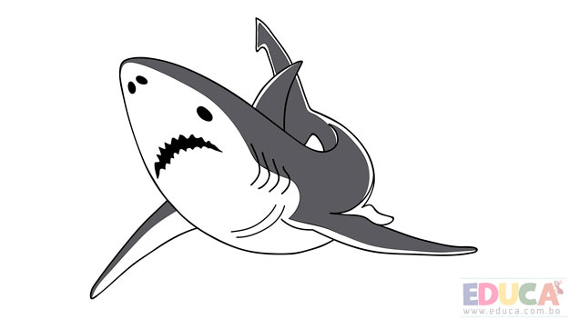 Dibujo de tiburon blanco a color - educa.com.bo