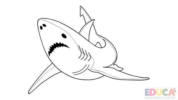 Dibujo de tiburon blanco para colorear - educa.com.bo