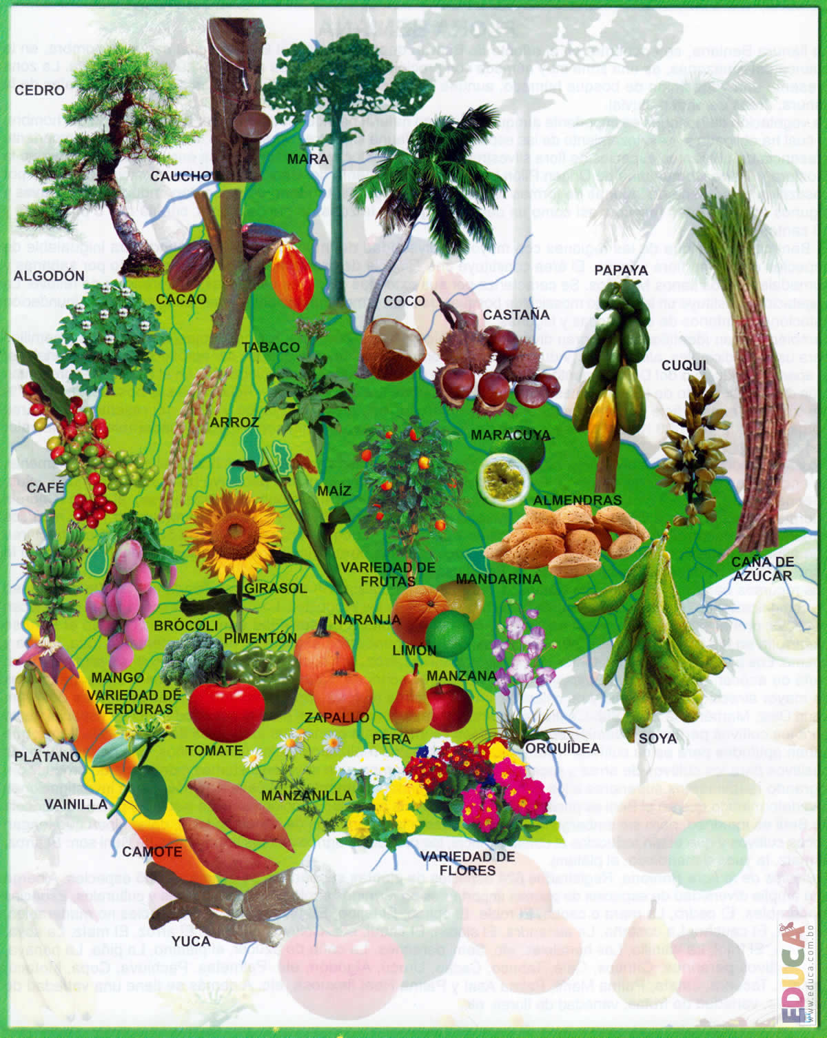 mapa-flora-beni-0116.jpg