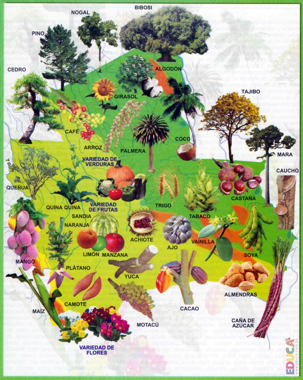 Flora de Santa Cruz  Departamento de Santa Cruz  Historia