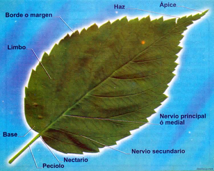 La hoja historia literatura educaci n de bolivia mapas for Hojas ornamentales con sus nombres