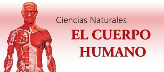 banner Ciencias Naturales - El Cuerpo Humano