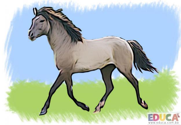El Caballo (Equus cabállus)