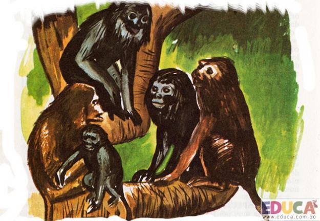 El Mono-Maneche (Alouata caraya)