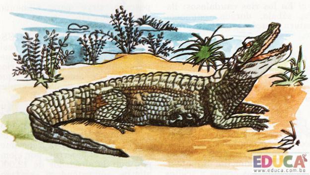 El Yacaré (Alligator niger)