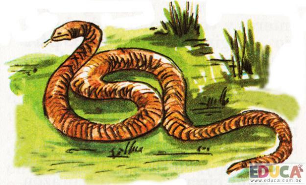 La Serpiente de Cascabel (Crotalus horridus)