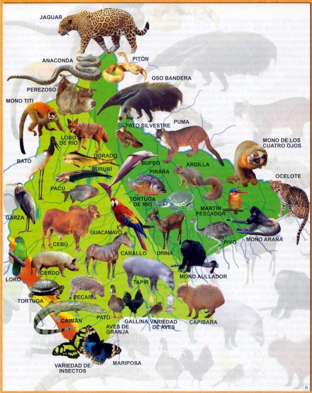 Mapa Fauna del Departamento de Beni - Mapas de Bolivia