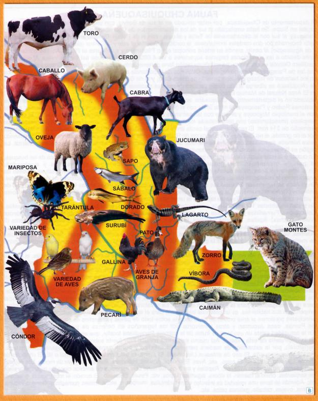 Mapa Fauna del Departamento de Chuquisaca Bolivia - Mapas de Bolivia
