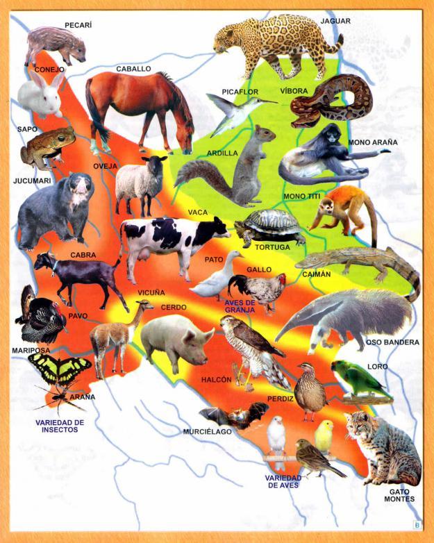 Mapa Fauna del Departamento de Cochabamba - Mapas de Bolivia