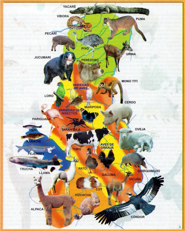 Mapa Fauna del Departamento de La Paz - Mapas de Bolivia