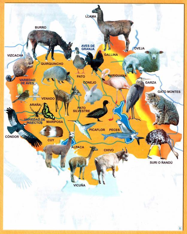 Mapa Fauna del Departamento de Oruro - Mapas de Bolivia