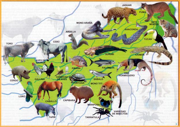 Mapa Fauna del Departamento de Pando - Mapas de Bolivia