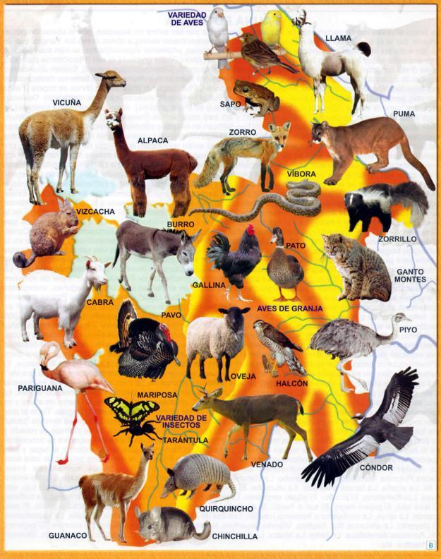 Mapa Fauna del Departamento de Potosí - Mapas de Bolivia