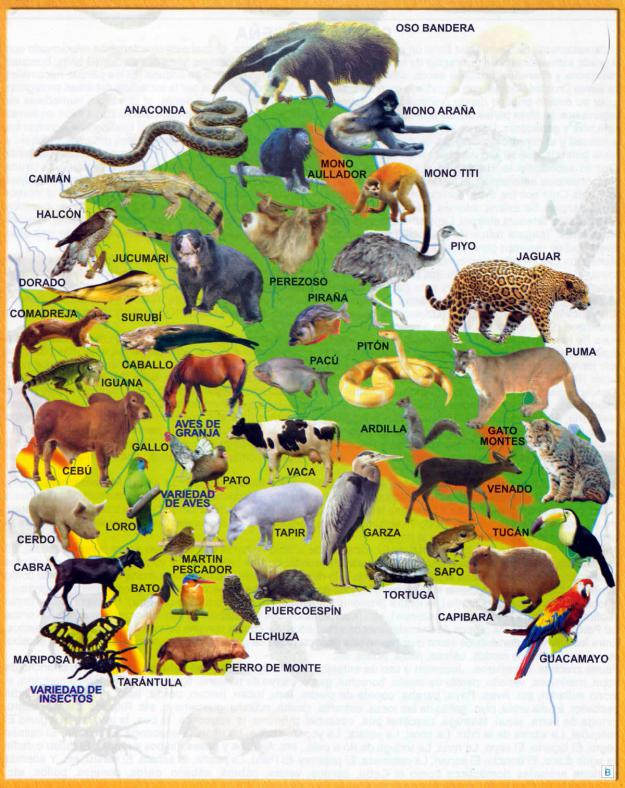 Mapa Fauna del Departamento de Santa Cruz - Mapas de Bolivia