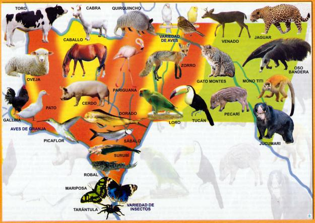 Mapa Fauna del Departamento de Tarija - Mapas de Bolivia