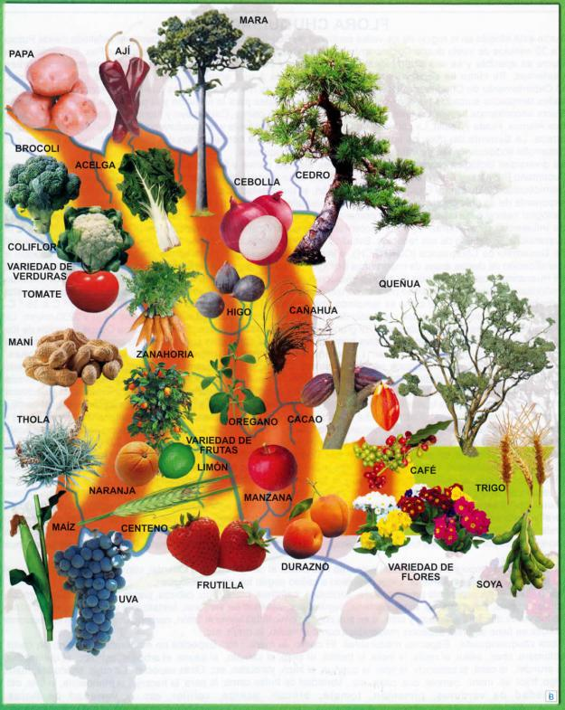 Mapa Flora del Departamento de Chuquisaca - Mapas de Bolivia