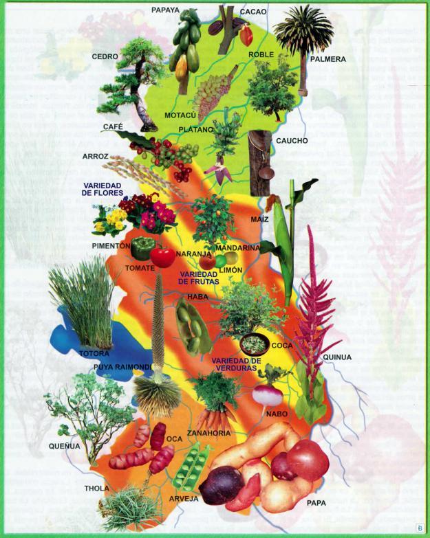 Mapa Flora del Departamento de La Paz - Mapas de Bolivia
