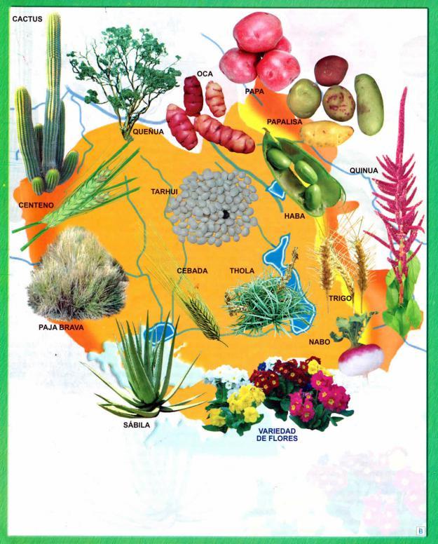 Mapa Flora del Departamento de Oruro - Mapas de Bolivia