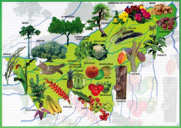 Mapa Flora del Departamento de Pando - Mapas de Bolivia
