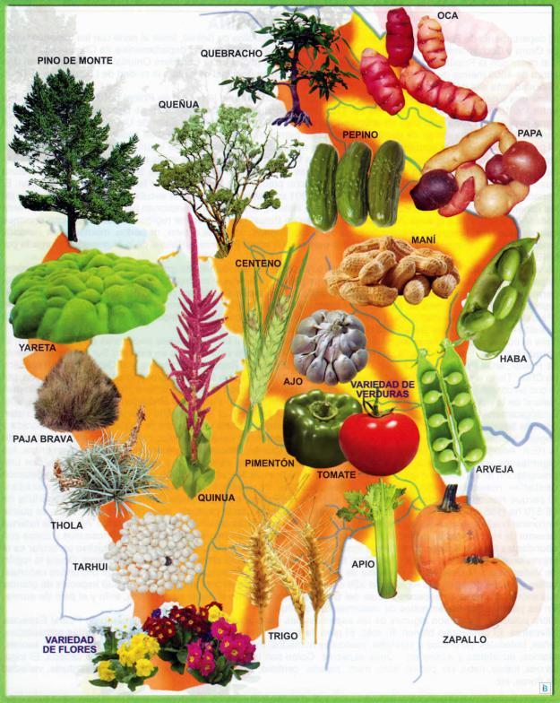 Mapa Flora del Departamento de Potosí - Mapas de Bolivia