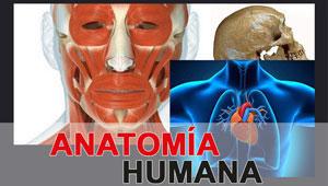Temas de Anatomía Humana - Pre Universitario