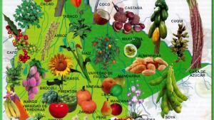 Mapa Flora del Departamento de Beni - Mapas de Bolivia