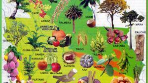 Mapa Flora del Departamento de Santa Cruz - Mapas de Bolivia
