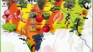 Mapa Flora del Departamento de Tarija - Mapas de Bolivia